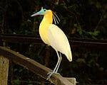 """Séjours """"Safaris et animaux"""" au Brésil"""