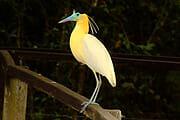 Séjours «Safaris et animaux» au Brésil